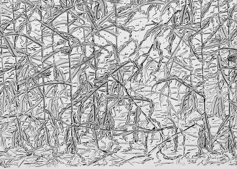 cornfield detail down web
