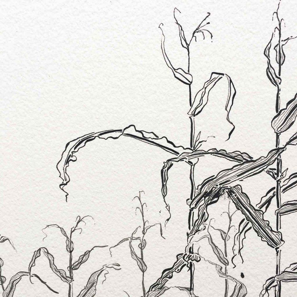 cornfield detail process 1